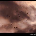 03/10/2011 – Foto-blog (035): Palomos al viento