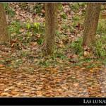 02/12/2011 – Foto-blog (065): Retazos de otoño (VI)