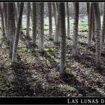 08/03/2012 – Foto-blog (123): El bosque onírico (III)