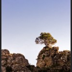 17/04/2012 – Foto-blog (146): El centinela de l'Encantà