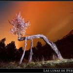24/04/2012 – Foto-blog (151): El almendro que aullaba a la Polar (II)