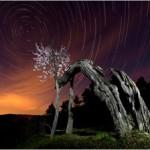 02/04/2012 – Foto-blog (139): El almendro que aullaba a la Polar