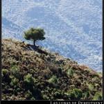 11/06/2012 – Foto-blog (174): El centinela de La Safor