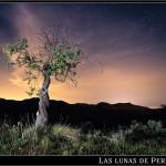 05/07/2012 – Foto-blog (179): El almendro que miraba a la Polar (II)