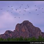 03/10/2012 – Foto-blog (205): Palomos al viento (III)