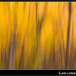 09/11/2012 – Foto-blog (220): Retazos de otoño (VIII)