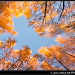 05/12/2012 – Foto-blog (230): Retazos de otoño (X)