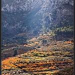 17/12/2012 – Foto-blog (235): El otoño de las cerezas