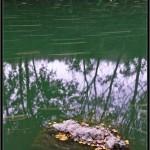 28/12/2012 – Foto-blog (240): Lentamente (II)