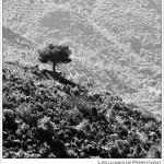 19/09/2014 – Foto-blog (347): El talaier de La Safor